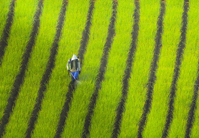 Man In Lines by pimpin_nagawan - People At Work Photo Contest