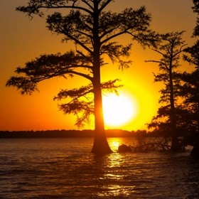 Reelfoot Lake Sunset copy