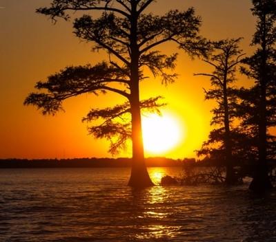 Reelfoot Lake Sunset copy