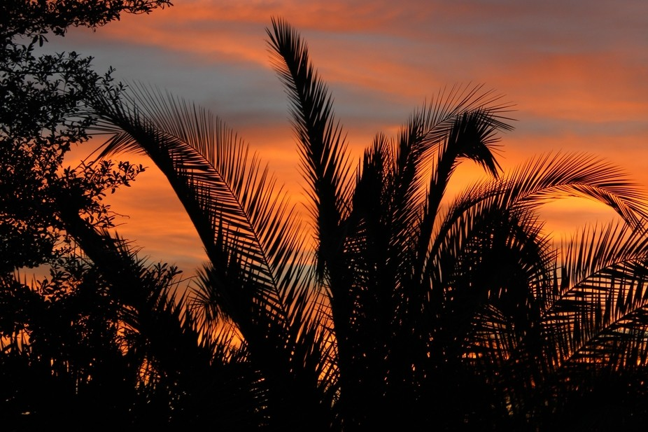Beautiful palm tree silhouettes against the setting sun.
