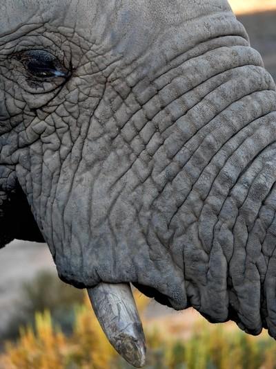 Zoomed in Elephant's eye