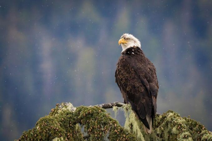 Rain bird by robgubiani - Just Eagles Photo Contest