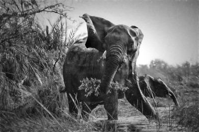 A Protective Mama Elephant With Calf in Black and White