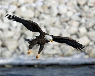 _T3R5354 Eagle 16x20