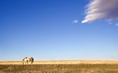The Plains (fullsizeoutput_3ee5)
