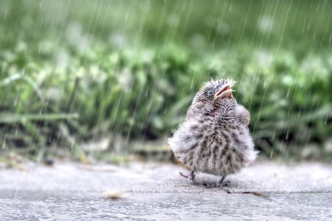 Singin in the Rain by nlhammondphotography - Rain Photo Contest