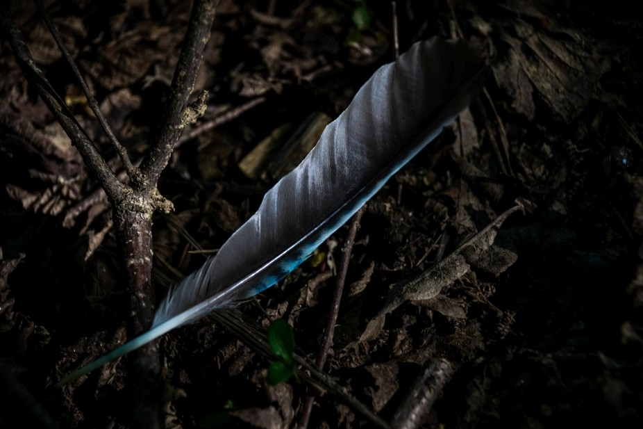 An abandoned feather