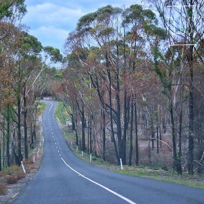 Every road leads somewhere, sometimes you just have to be brave & take the first step! #roadsofinstagram #roads #trees #whitelines #discovertasmania #hobartandbeyond #instatassie #tassiepics #tassie #hobart #southerntasmania  #australiagram #focusaust