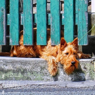 Waiting for his owner #patientpooch #waiting #animalsofinstagram #dogsofinstgram #discovertasmania #tasmaniagram #hobartandbeyond #instatassie #tassiepics #tassie #hobart #southerntasmania  #australiagram #focusaustralia #ig_discover_australia #australia_