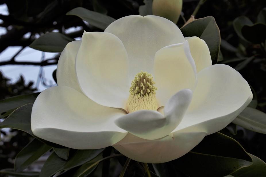 SD Gardenia