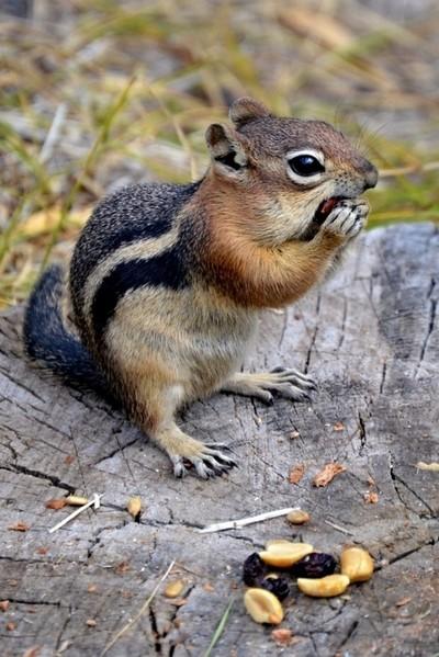 George the chipmunk