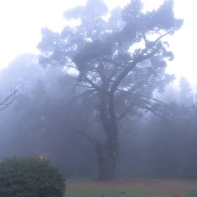 Hogsback is a small village, very high up in the mountains.  This was early morning mist after a previous day's rain.