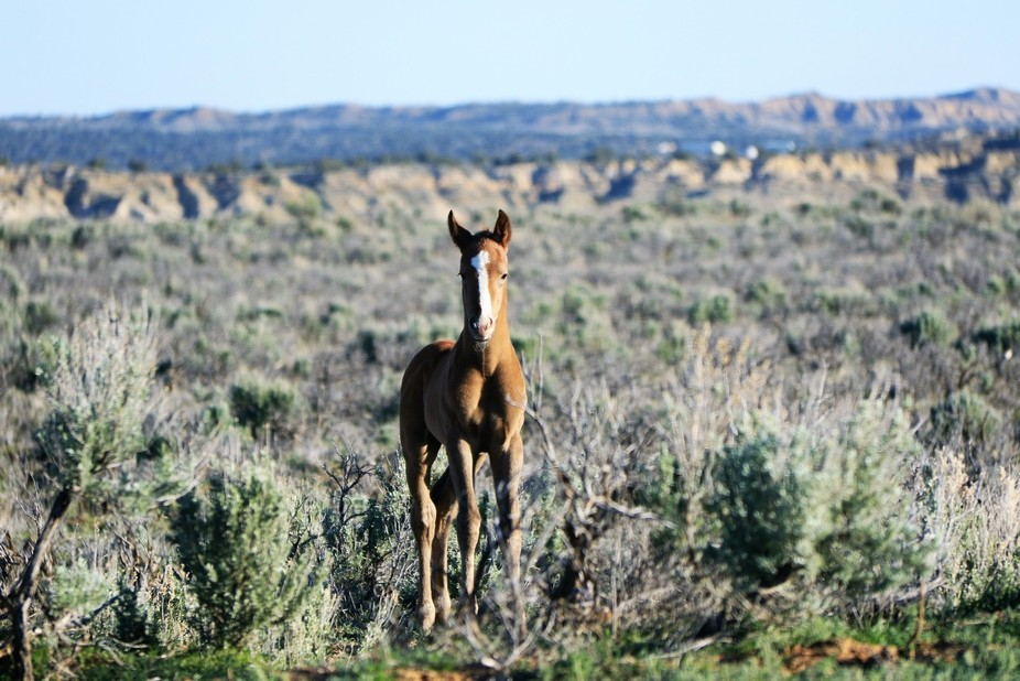 Drove by this new born wild mustang foal and keep watching it grow.