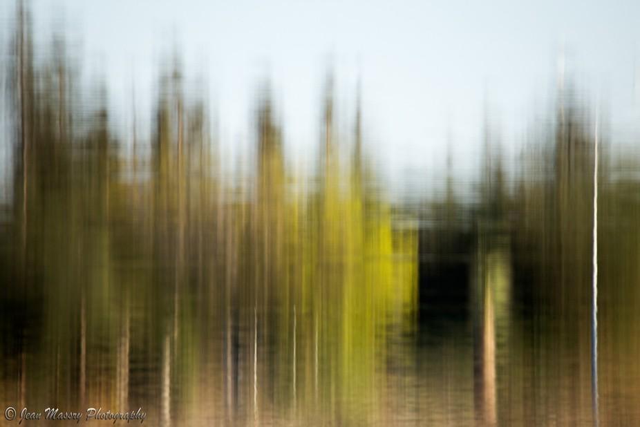 Foliage Reflection