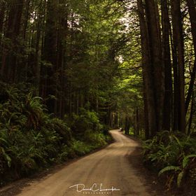 Prairie Creek National Park. Road to the beach in the Redwoods. End of the line was Fern Canyon one of the locations of the Speeder bike scene in...