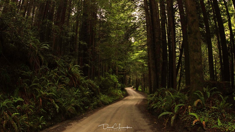 Prairie Creek National Park. Road to the beach in the Redwoods. End of the line was Fern Canyon o...