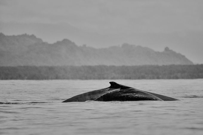 Whales by JaribFoto - Big Mammals Photo Contest