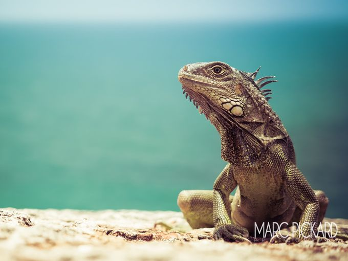 Take My Good Side by marcpickard - Reptiles Photo Contest
