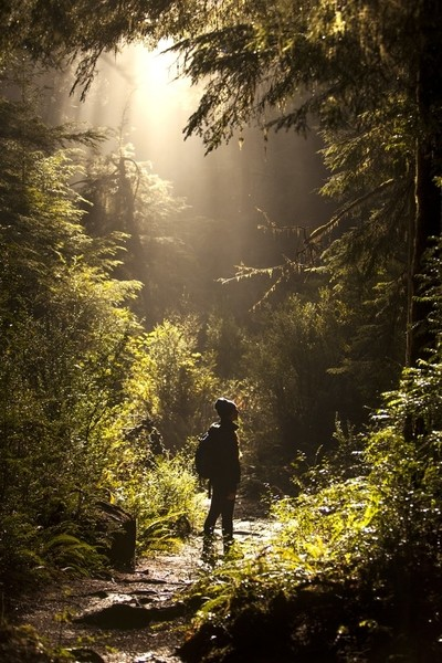 BoyScout Tree trail