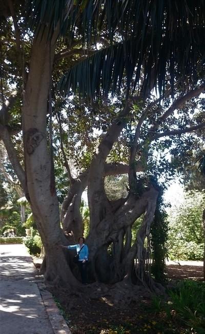 Woman by a big tree
