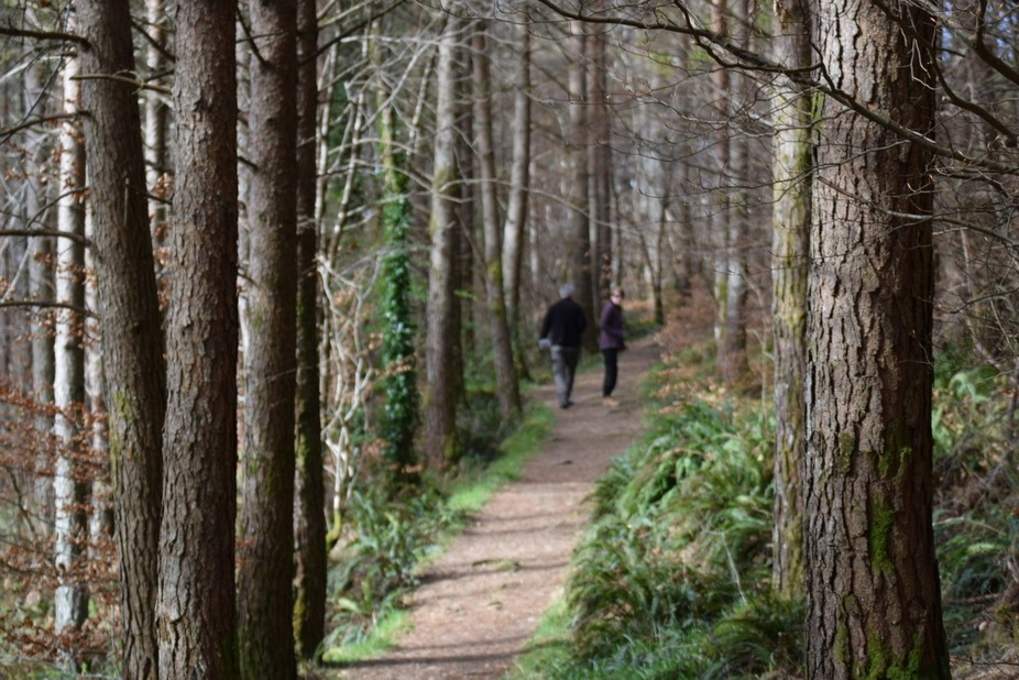 Trees and path Lochalsh 1