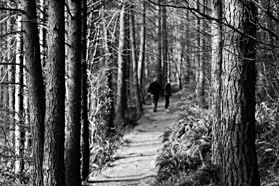 Trees and path Lochalsh 1 copy
