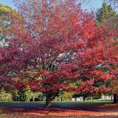 Colours of Mount Wilson (3) - NSW, Australia