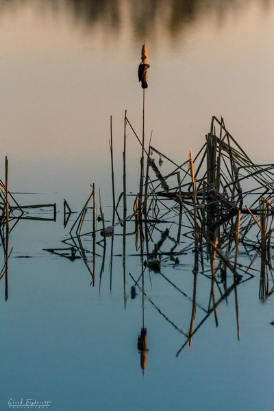 Red-winged Reflections-0707