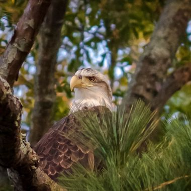 One of my favorite looks from an Eagle. Very stern and very calm.
