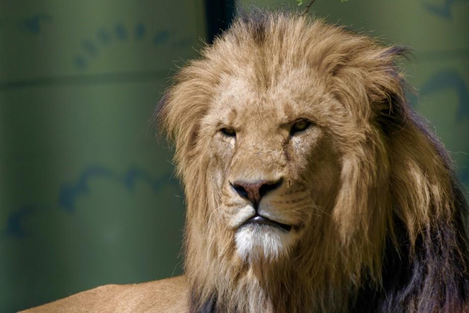 Lion King 2017 - I