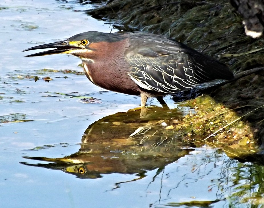 While snapping a few pix at Tenney Park here in Madison, Wisconsin one Saturday morning, I was su...