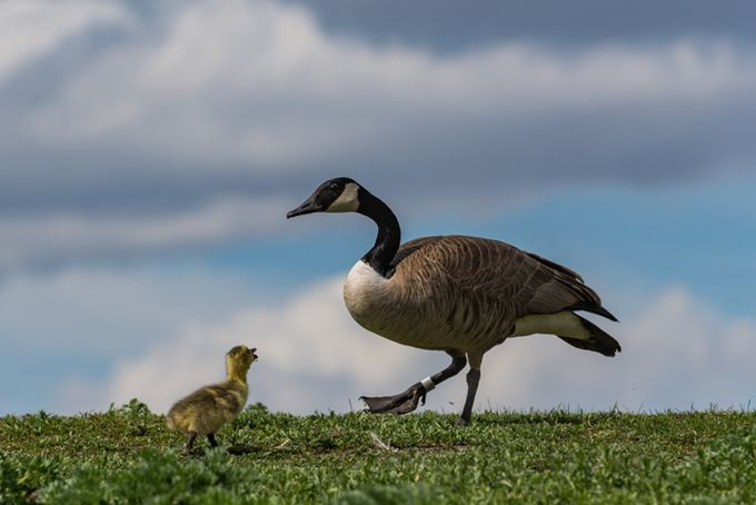 But Mom by labels_30 - Celebrating Nature Photo Contest Vol 5