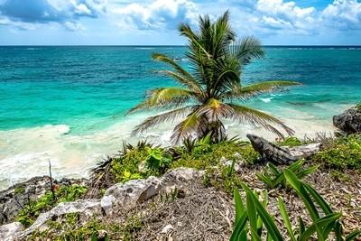 Tulum - playa Paradisiaca e Iguanas
