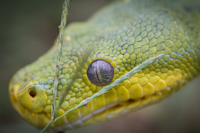 IMG_8343-2 by krystlesempf - Snakes Photo Contest