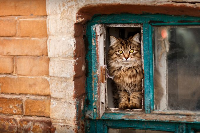 Street cat by Nikolishin - Feline Beauty Photo Contest