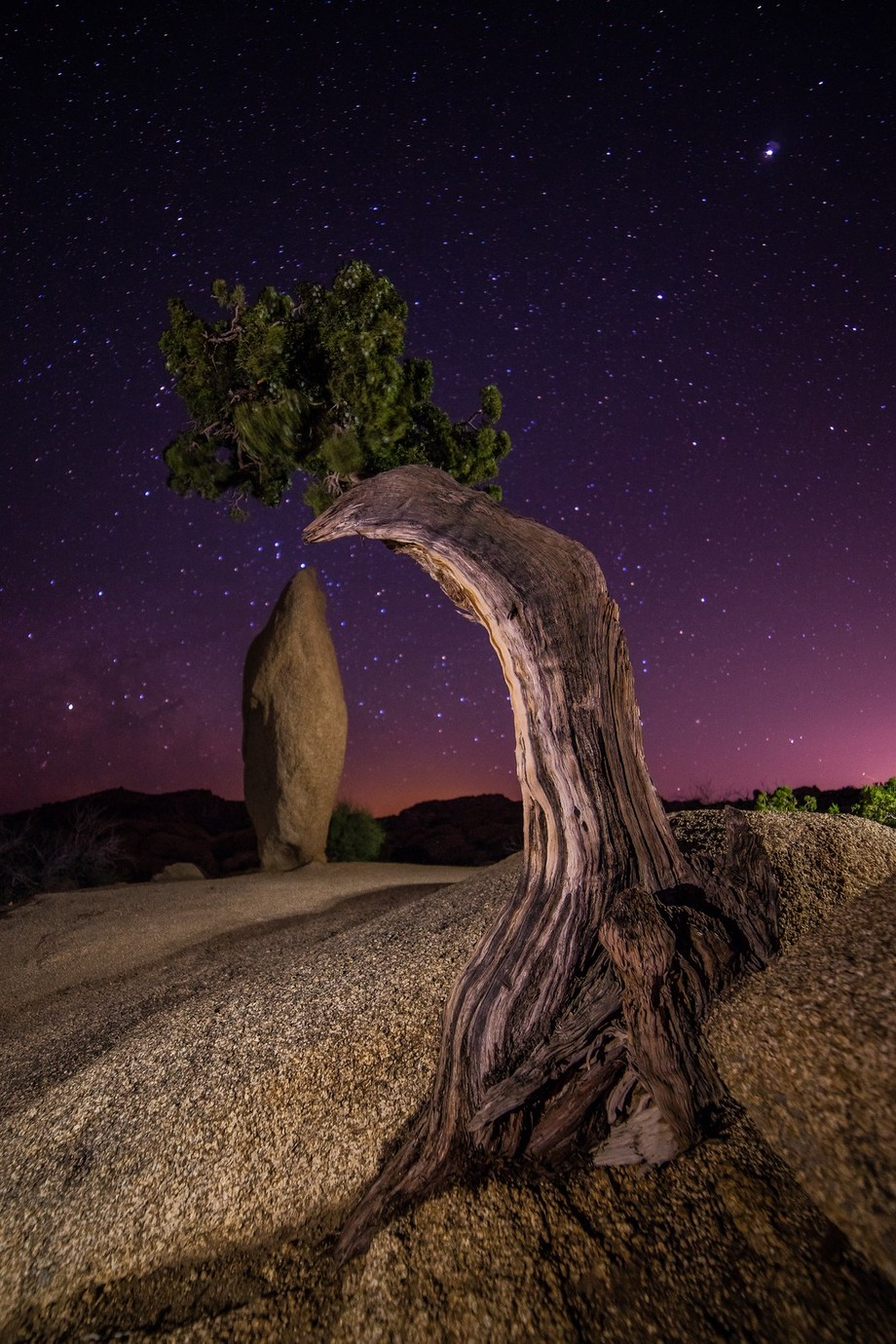 Juniper Under the stars by jessicacathrinesantos - Curves In Nature Photo Contest