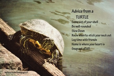Advice From a Turtle...