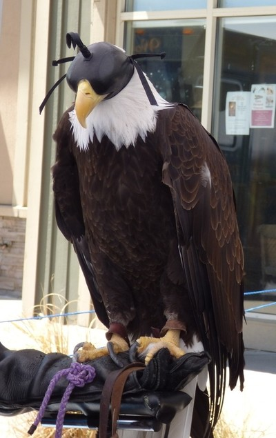 American Eagle Hooded