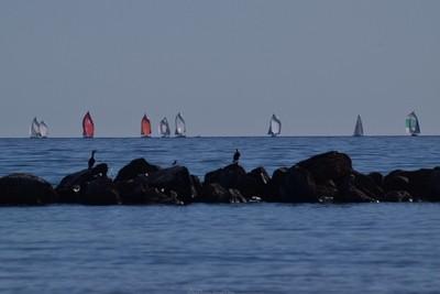 Watching The Yatchs. Semaphore South Australia