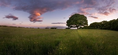 The Old Oak - Pano