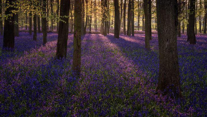 Dockey Wood, Ashridge by gabornagy - The First Light Photo Contest