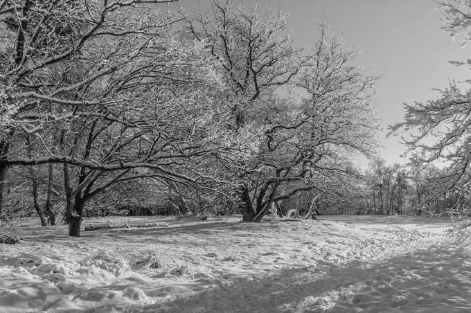 winterbeelden LVB (3)
