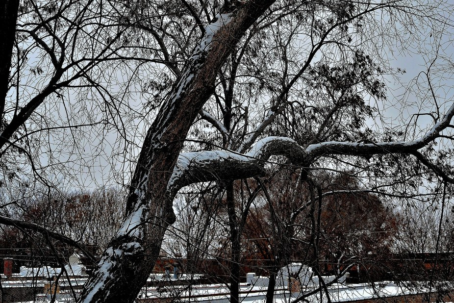 Northern Illinois, Chicago winter branches blanketed by snow.