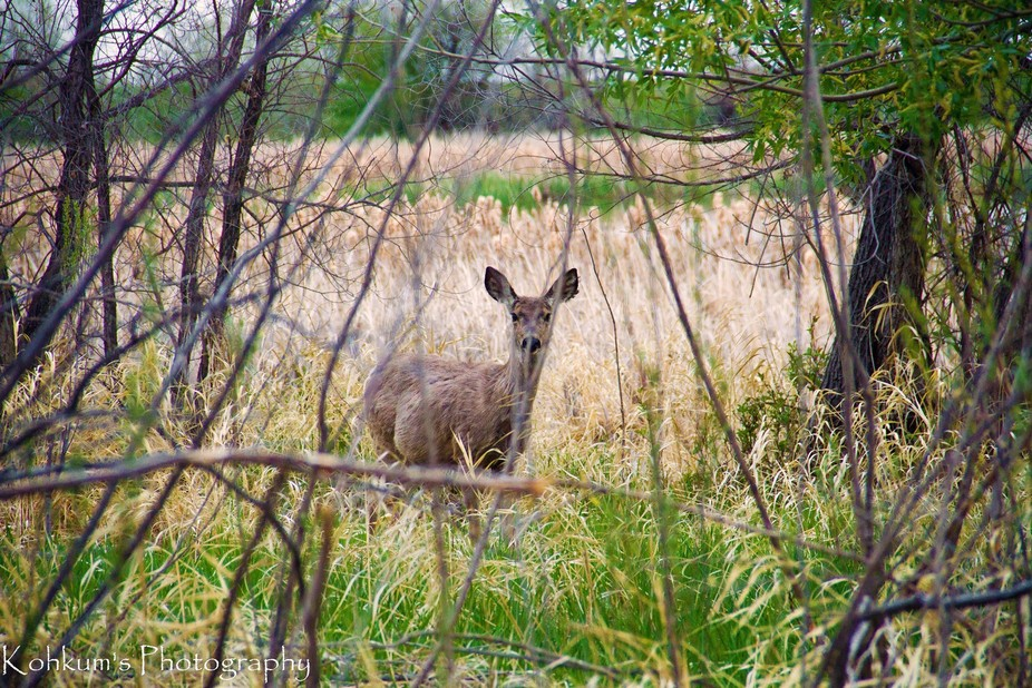 I was camping at a Provincial Park and walked out of my trailer to a deer watching me.  So I foll...