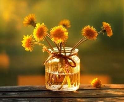 Dandelions in a Jar