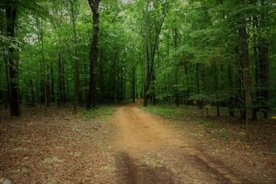 Backwoods Road