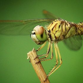 May, June & July is the time for 'Dragonflies'.. ! ..#dragonfly #fly #ma