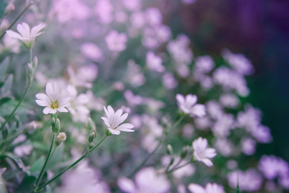 tinny flower