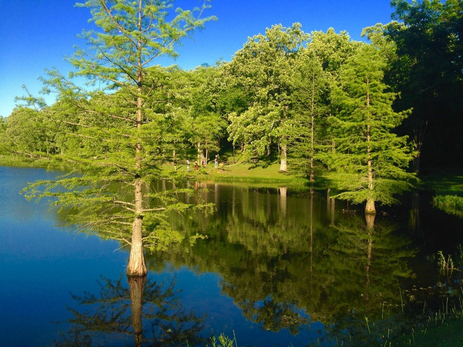 As I was walking around the lake I took this photo. There is always a pretty scene as I walk arou...