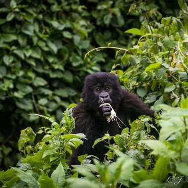 Breakfast In The Jungle
